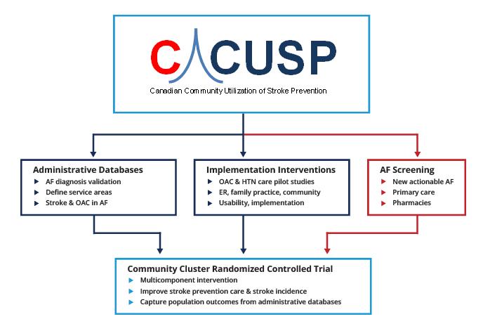 studies-c-cusp-kt-network-vision